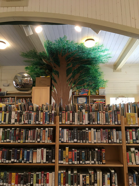 tree in the Warren Library kids' room